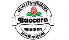 Blumen Baccara GmbH